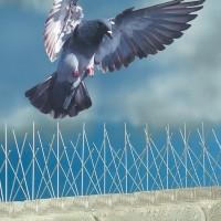 Заграждение от птиц
